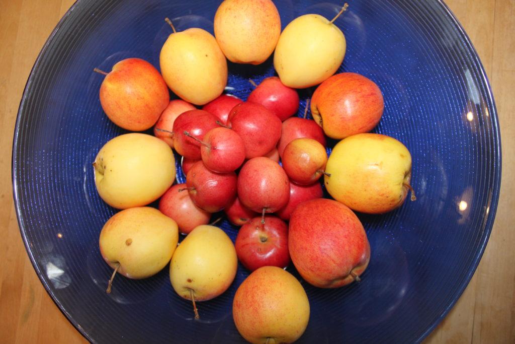 Äpplen i blå skål